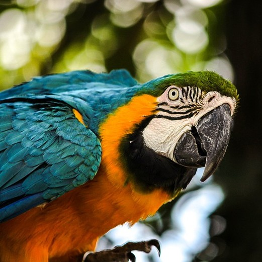 papegaaienziekte